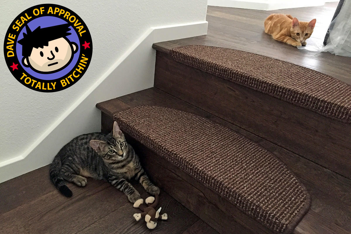 Jake and Jenny kittens on casa pura stair treads!