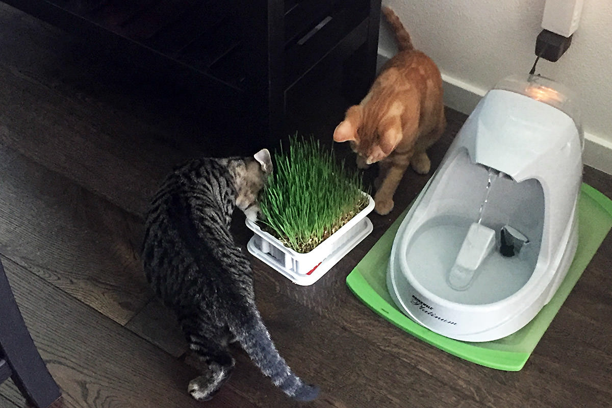Jenny in the Cat Grass!