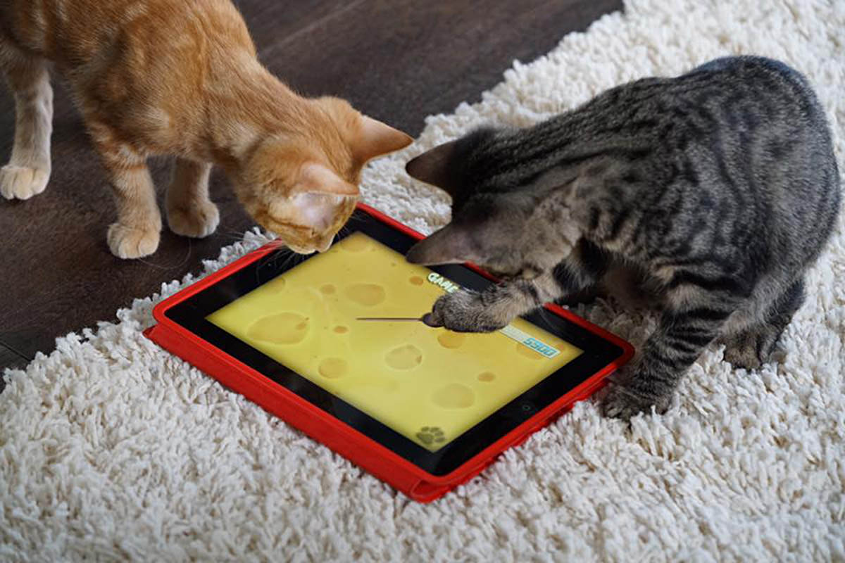 Kittens and an iPad