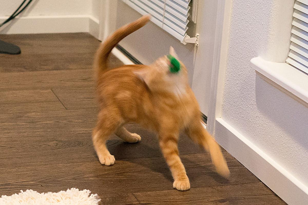 Jenny Thrashin' a Toy Mouse