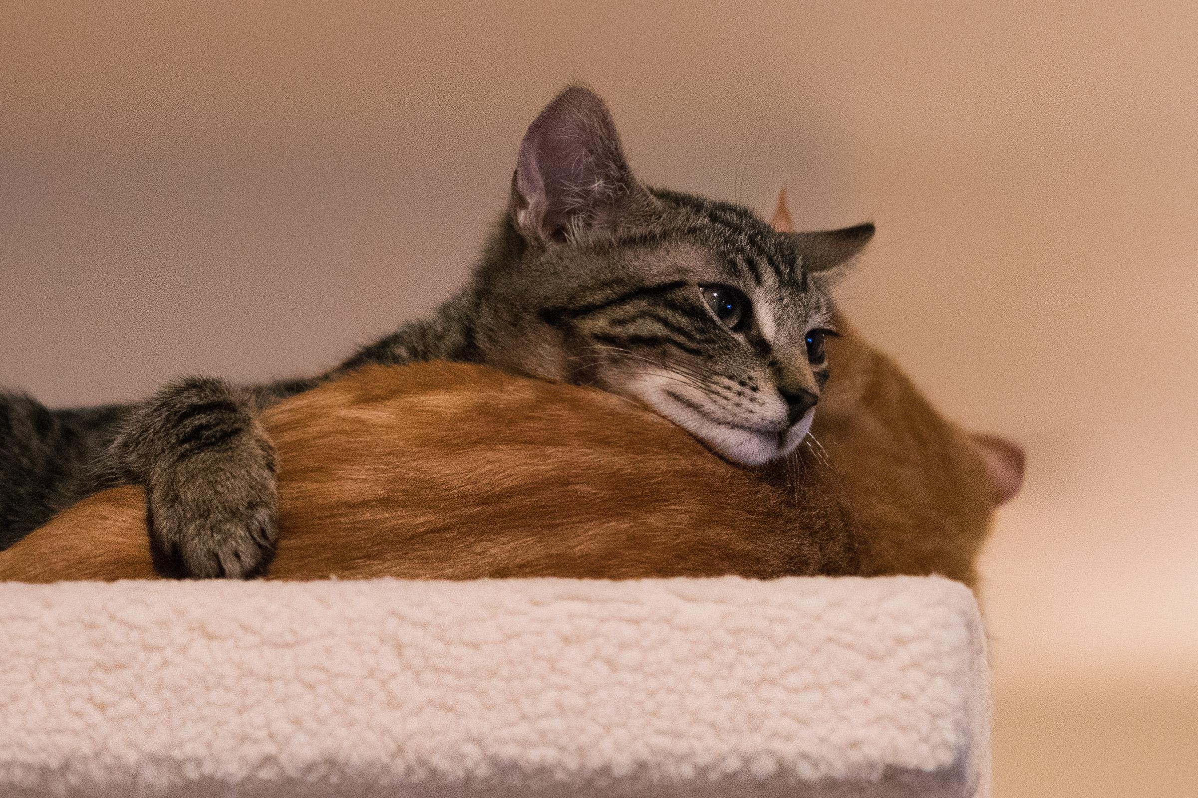 Jake and Jenny Kittens!