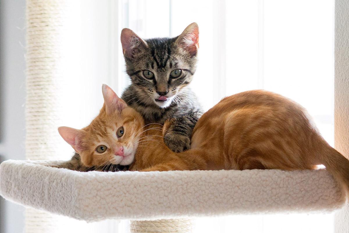 VAMPIRE CATS!!!!