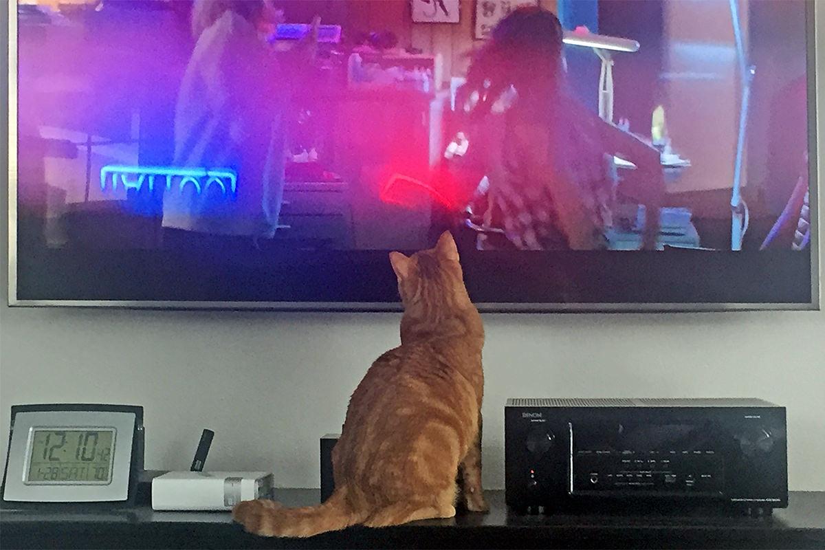 Jenny TV Watcher