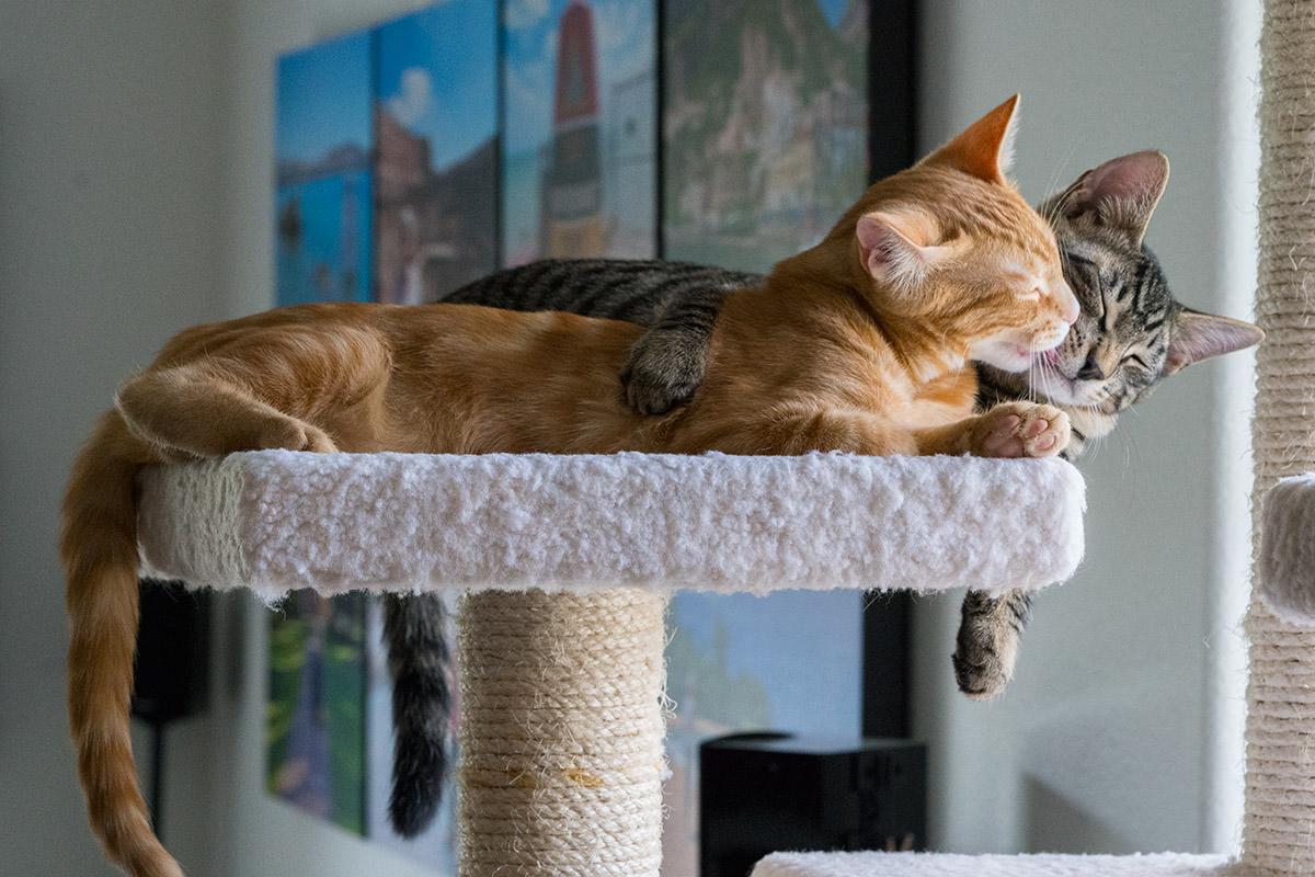 Caturday Cat!