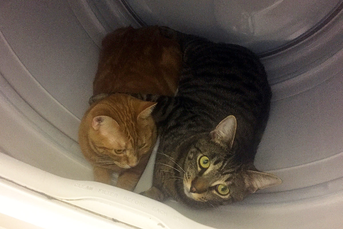 Cats in the Clothes Dryer