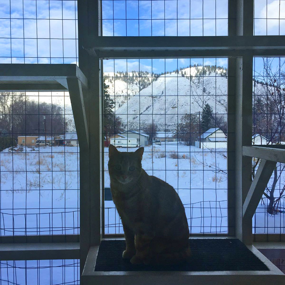 Jenny in a Cold Catio